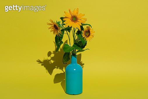 Sunflower in glass bottle - gettyimageskorea