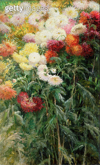 <b>Title</b> : Clump of Chrysanthemums, Garden at Petit Gennevilliers, 1893 (oil on canvas)<br><b>Medium</b> : oil on canvas<br><b>Location</b> : Private Collection<br> - gettyimageskorea