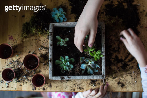 Overhead shot of children planting succulents. - gettyimageskorea