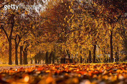 Autumn Trees In Park - gettyimageskorea