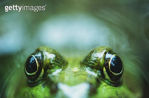 Peekaboo Frog - gettyimageskorea
