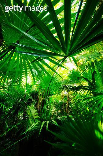 Mexico, Yucatan, Palm grove - gettyimageskorea