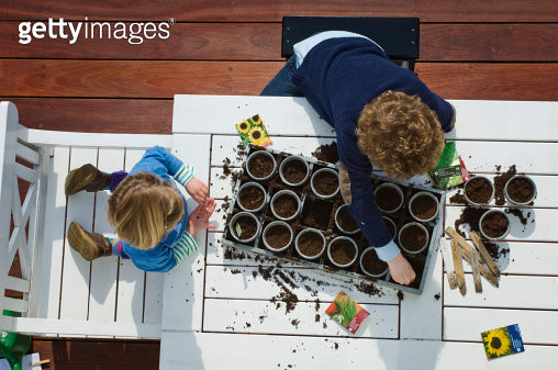 Children planting seeds on table (Part of series) - gettyimageskorea