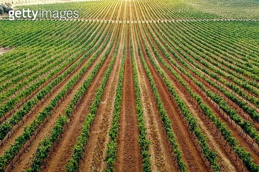 Wine region in Alentejo, Portugal, aerial view. Symmetry view from above. - gettyimageskorea