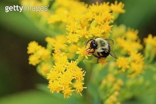Floral - Minnesota Valley National Wildlife Refuge - gettyimageskorea