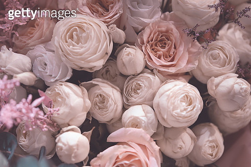 Pastels, pink roses viewed from above - gettyimageskorea