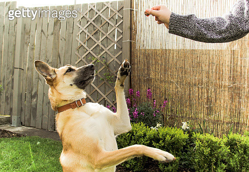 Dog asking for a snack - gettyimageskorea