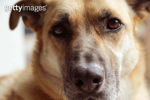 Dog portrait close up - gettyimageskorea