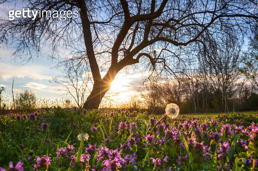 Sunny april morning in the city park - gettyimageskorea