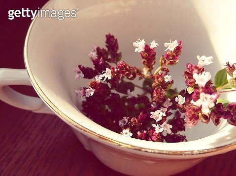 Close-Up Of Plants In Mug On Table - gettyimageskorea