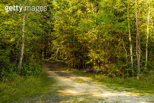 Leisure Hiking Exploring A Green Forest Pathway Into The Peaceful Wilderness With Sunrays Through... - gettyimageskorea