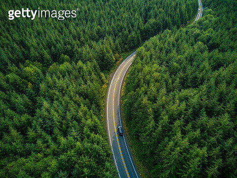 Aerial view of a road winding through managed evergreen forest in Grays harbor County, Washington, USA. - gettyimageskorea