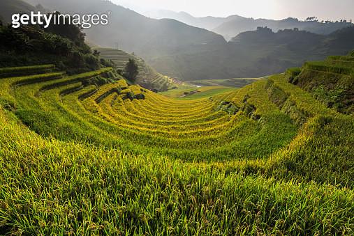 Rice Fields On Terraced. - gettyimageskorea