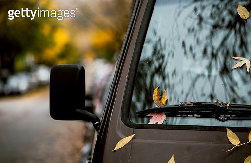 Autumn leaves on the hood of a van. - gettyimageskorea