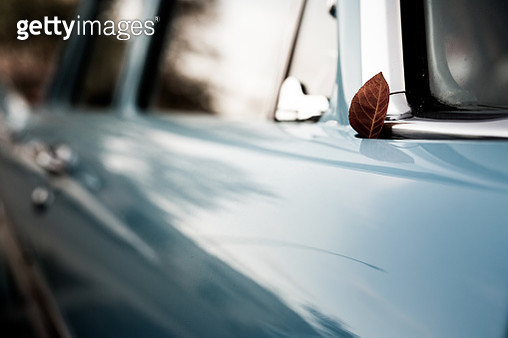 Autumn leaf on the hood of a vintage car - gettyimageskorea