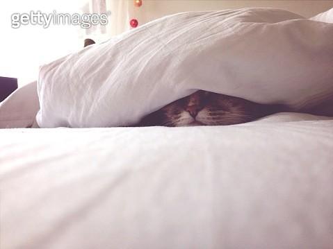 Close-Up Of Cat Sleeping On Bed Under Blanket - gettyimageskorea