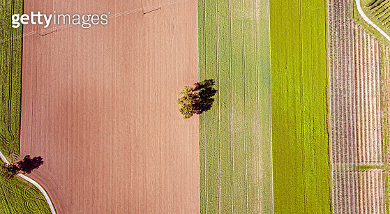 Overhead top down drone shot of a lone tree in the middle of a ploughed field. The field and crops form stripes across terrain as the tree sits in the middle. - gettyimageskorea