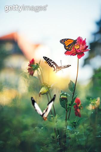 Butterfly Garden - gettyimageskorea