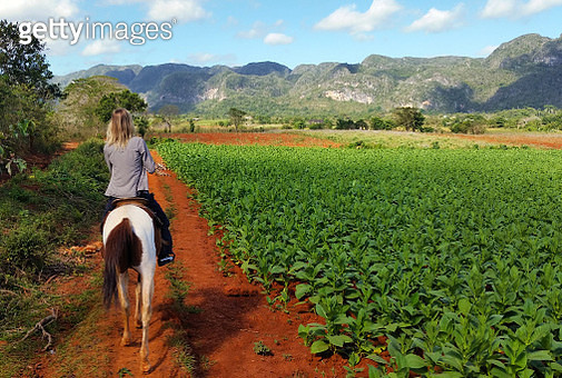 Rear View Of Woman Horseback Riding On Agricultural Field - gettyimageskorea