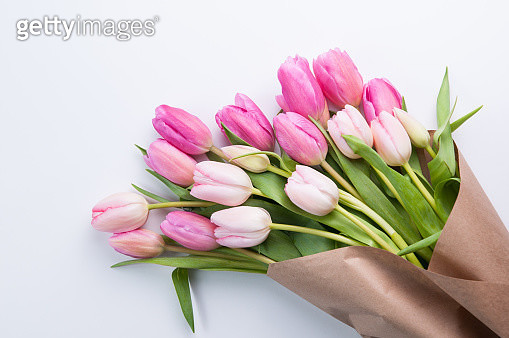 Close-Up Of Fresh Pink Tulips Against White Background - gettyimageskorea