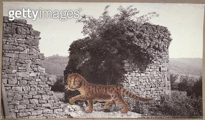 <b>Title</b> : Tiger, Tiger, c.1938 (collage)Additional Infopoem by William Blake (1757-1827);<br><b>Medium</b> : collage<br><b>Location</b> : Private Collection<br> - gettyimageskorea