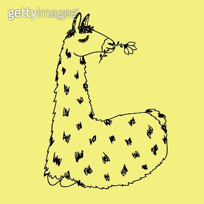cute llama - gettyimageskorea