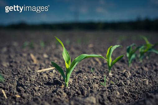Plant Growing On Field - gettyimageskorea