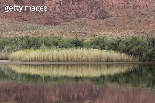 Colorado River shoreline reflection - gettyimageskorea