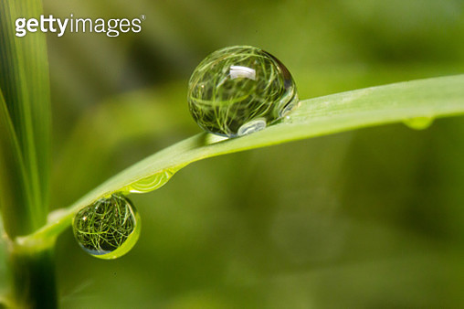 Close-Up Of Water Drop On Leaf - gettyimageskorea