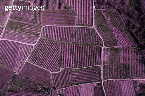 Aerial pictures from a drone in the cultivated lands of the Lleida plane in the Catalonia region with the beautiful pattern and texture created by the blooming trees with pink flowers and paths between the fields. - gettyimageskorea