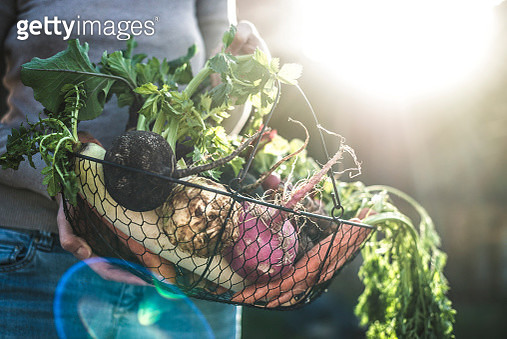 Womans hands holding wire basket with root vegetables - gettyimageskorea