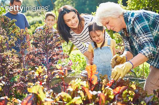 Multi-generation family in vegetable garden - gettyimageskorea