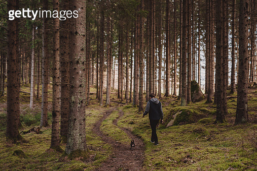 Man  walking his old chihuahua dog in forest - gettyimageskorea