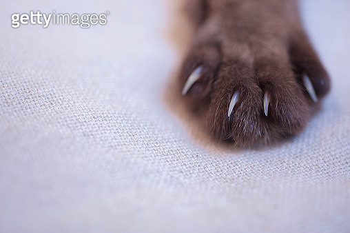 Close-Up Of Cat Paw On Bed - gettyimageskorea