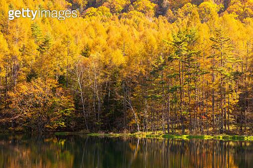Mishaka pond in Autumn - gettyimageskorea