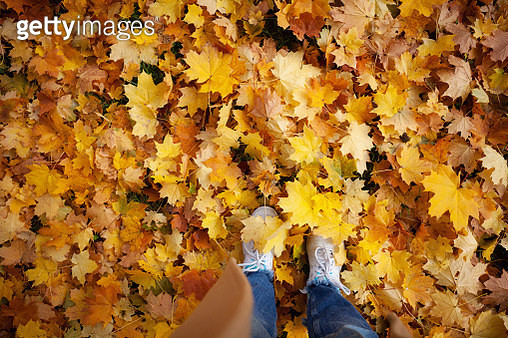 Low section of woman standing on fallen yellow maple leaves - gettyimageskorea