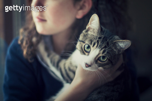 Cat in the arms of a girl looking at camera - gettyimageskorea