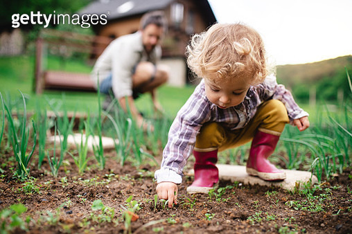 A man with daughter in the garden, planting seedlings. - gettyimageskorea