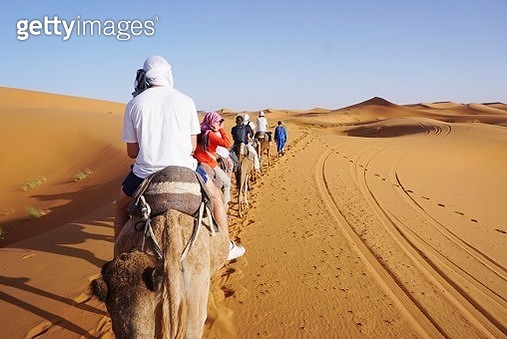 Rear View Of Tourists Riding On Camels In Sahara Desert - gettyimageskorea