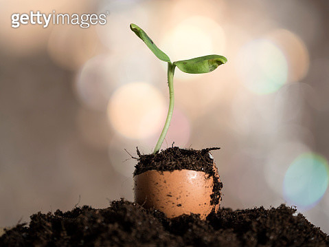 Eggshell used as flower pot with a small plant growing in his interior - gettyimageskorea