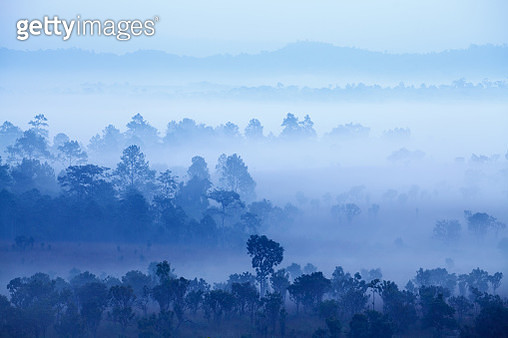 Fog In Forest At Thung Salang Luang National Park Phetchabun - gettyimageskorea
