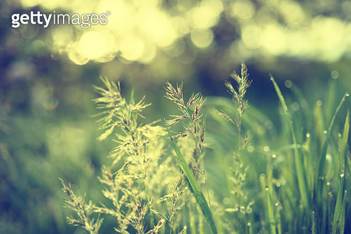 Natural Abstract Sunny Background - gettyimageskorea