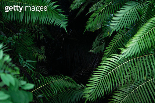 Black tropical background with green plants close-up view after rain. - gettyimageskorea