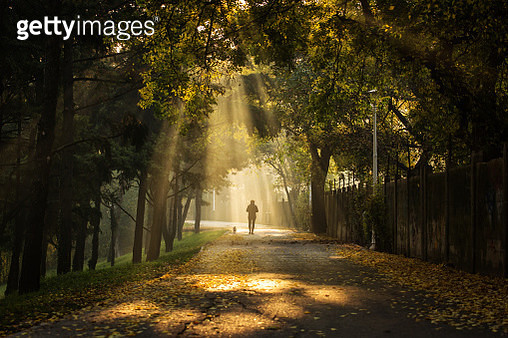 Woman enjoying walking in a beautiful alley of a park with rays of light in autumn morning - gettyimageskorea