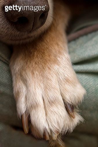 Pet Extreme Close-ups  - gettyimageskorea