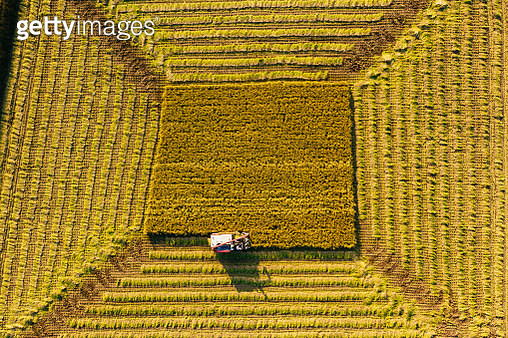 Aerial view Combine Harvester working on the Paddy Field in Autumn - gettyimageskorea