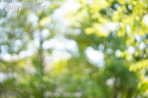 blur abstract background - gettyimageskorea