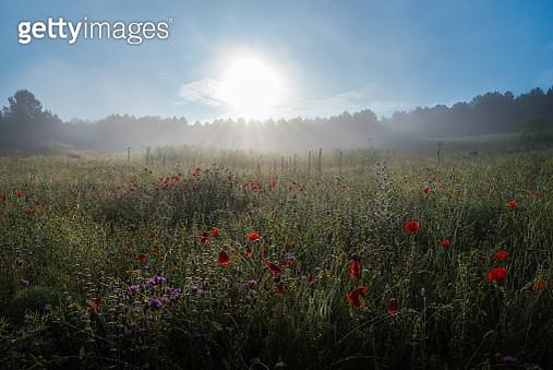 Spring At Sunrise - gettyimageskorea