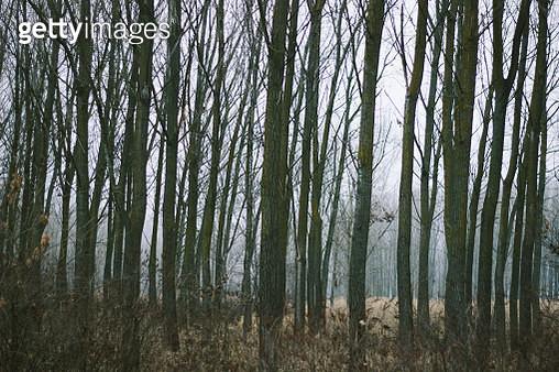 Empy forest - gettyimageskorea