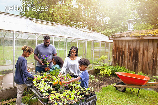 African-American family with three children working together at backyard plant nursery - gettyimageskorea